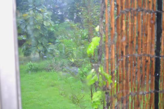 暴風雨です。_c0119197_10322352.jpg