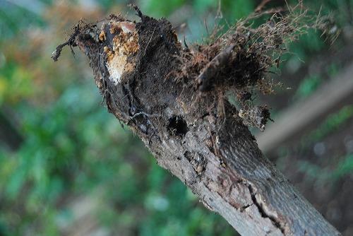この夏の害虫、、、_c0124100_22592380.jpg
