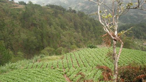 在バギオの日本の方と植林に行ってきました。 _b0128901_1332287.jpg