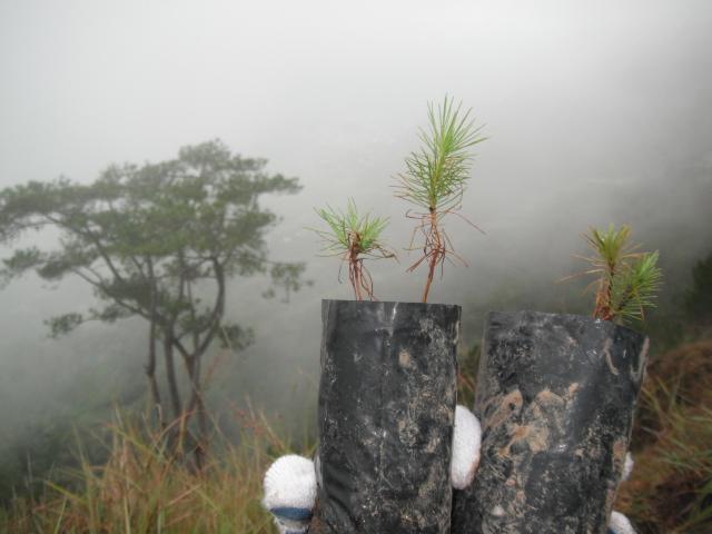在バギオの日本の方と植林に行ってきました。 _b0128901_13344496.jpg