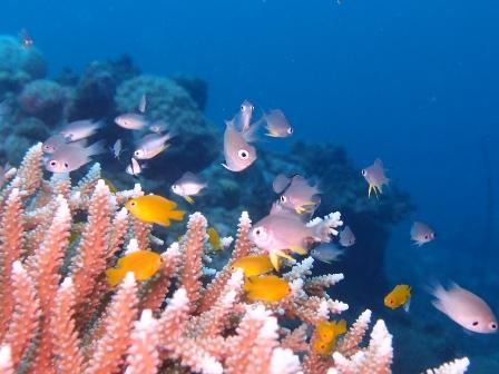 回復なる海!!_a0155606_18341778.jpg