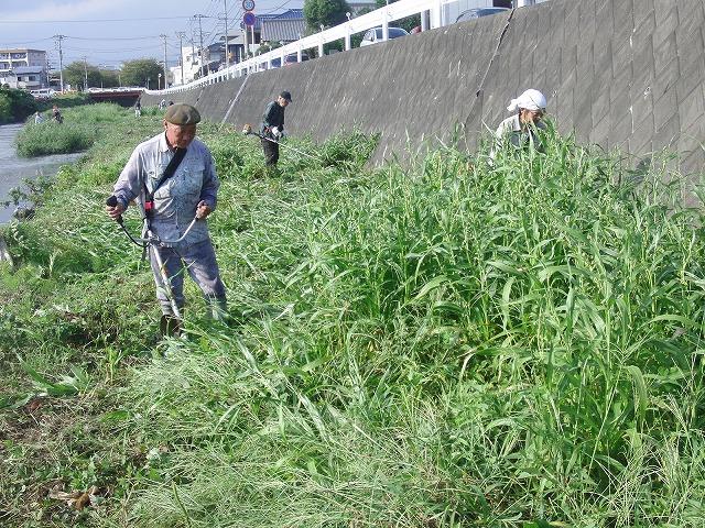 「秋の芋煮会」を目標?に今年3回目の小潤井川の草刈り清掃_f0141310_8145287.jpg