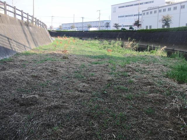 「秋の芋煮会」を目標?に今年3回目の小潤井川の草刈り清掃_f0141310_8174960.jpg