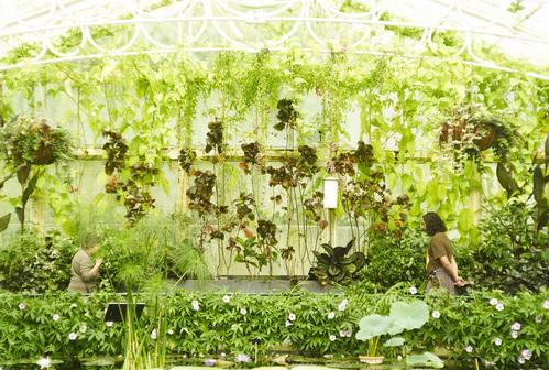 ロンドンの植物園_b0212922_1440213.jpg