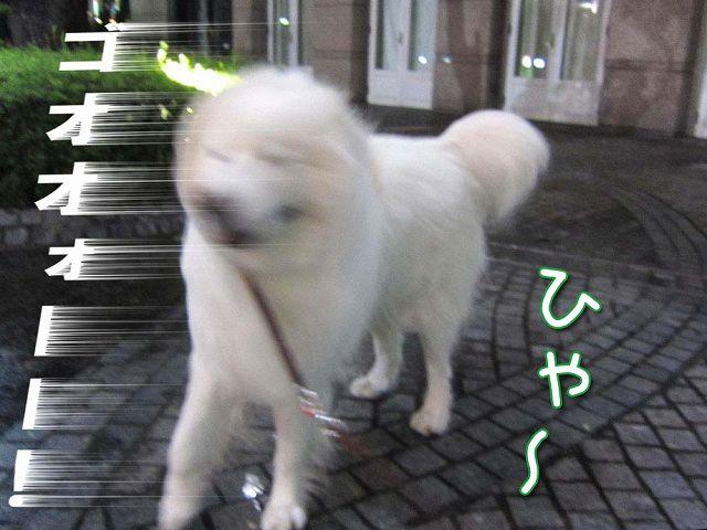 台風通過後のお散歩_c0062832_7261289.jpg