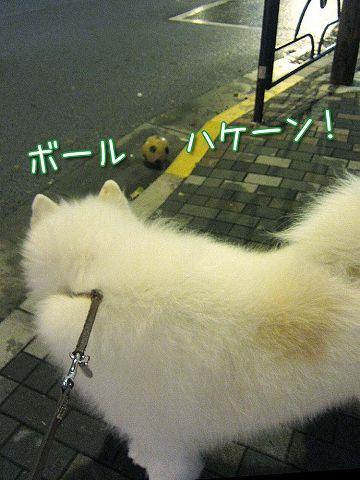 台風通過後のお散歩_c0062832_7262498.jpg