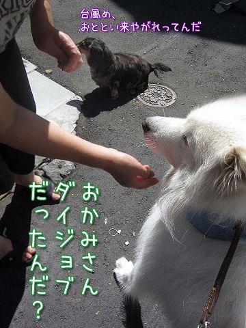 台風通過後のお散歩_c0062832_72727.jpg