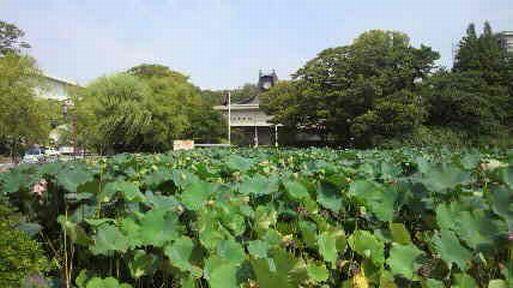 秋田まるごと市場_f0081443_21165547.jpg