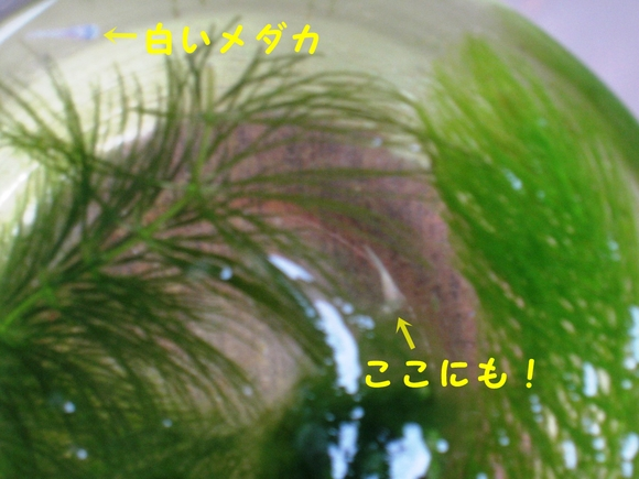 e0228147_22173452.jpg
