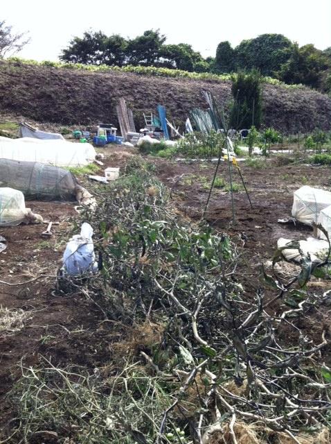 倒れたトマト&ナス・・の片付けに 3名もボランティアの方が・・_c0222448_15324.jpg