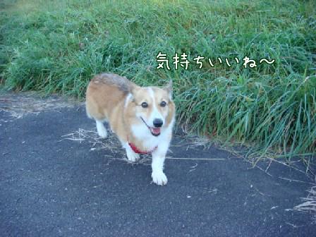 爽やかな秋晴れ_f0064906_17564491.jpg