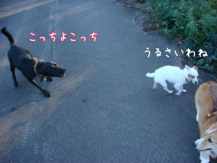 爽やかな秋晴れ_f0064906_17585025.jpg