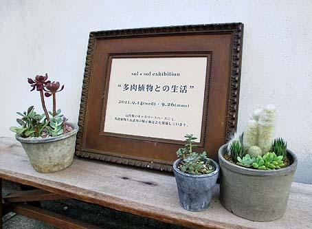 「多肉植物との生活」は月曜日までです。_d0193211_18335842.jpg