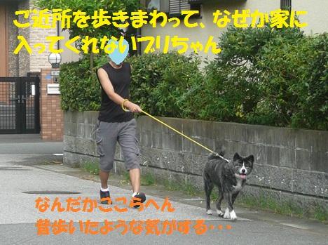 f0121712_648322.jpg