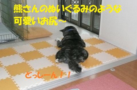 f0121712_7344558.jpg