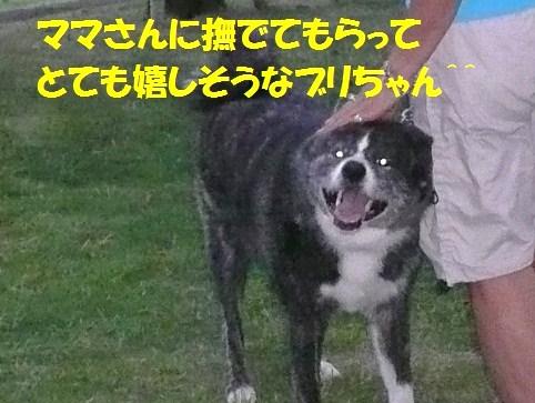f0121712_839415.jpg