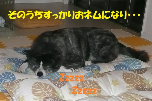 f0121712_924442.jpg