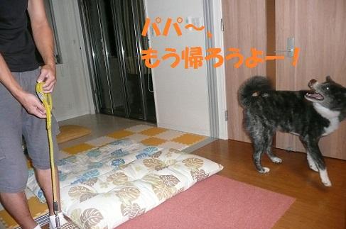 f0121712_925579.jpg