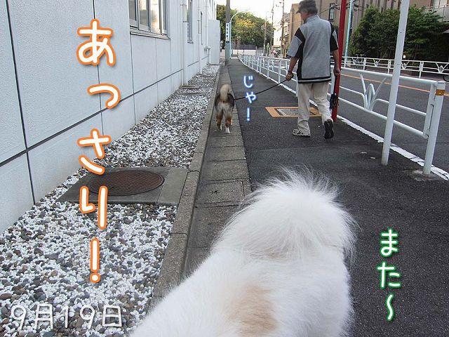 お散歩ダイジェスト_c0062832_7471726.jpg