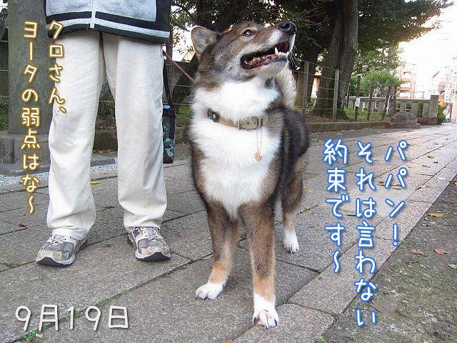 お散歩ダイジェスト_c0062832_747365.jpg