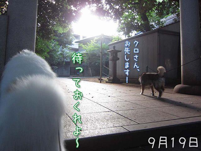 お散歩ダイジェスト_c0062832_747969.jpg