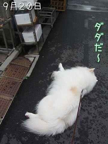 お散歩ダイジェスト_c0062832_7481722.jpg