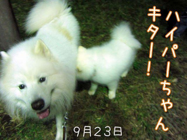 お散歩ダイジェスト_c0062832_7482655.jpg