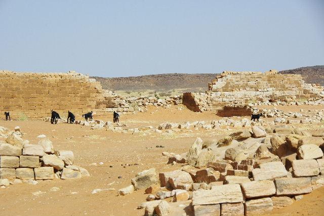 【スーダン周遊】 ムサワラット遺跡 (2) 黒ヤギの群れと遺跡_c0011649_2342037.jpg