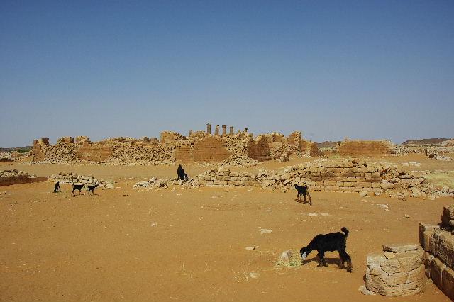 【スーダン周遊】 ムサワラット遺跡 (2) 黒ヤギの群れと遺跡_c0011649_23505596.jpg