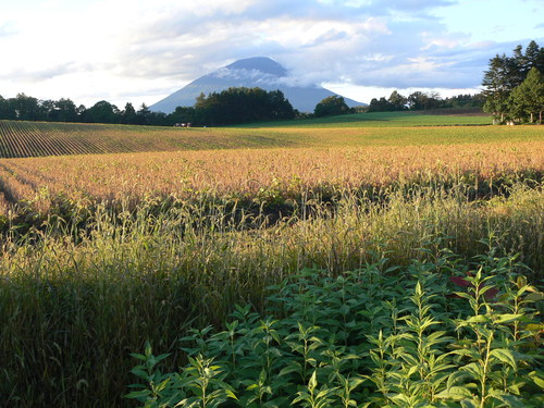 畑のある風景_b0068572_23315952.jpg