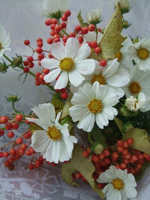 オークリーフ(白いコスモスと赤いビバーナムの花束)_f0049672_1264073.jpg