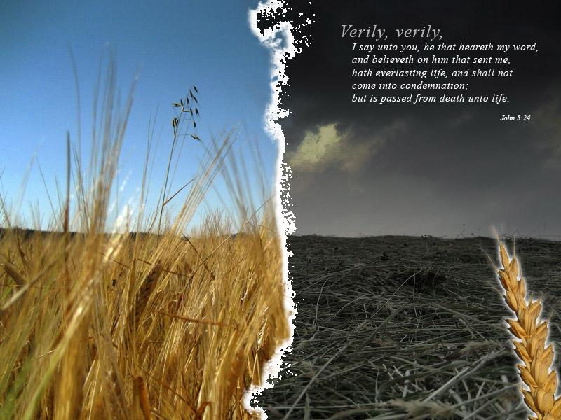 9月25日ホセア書7-10章『良い種蒔きを命ずる神』_d0155777_23313987.jpg