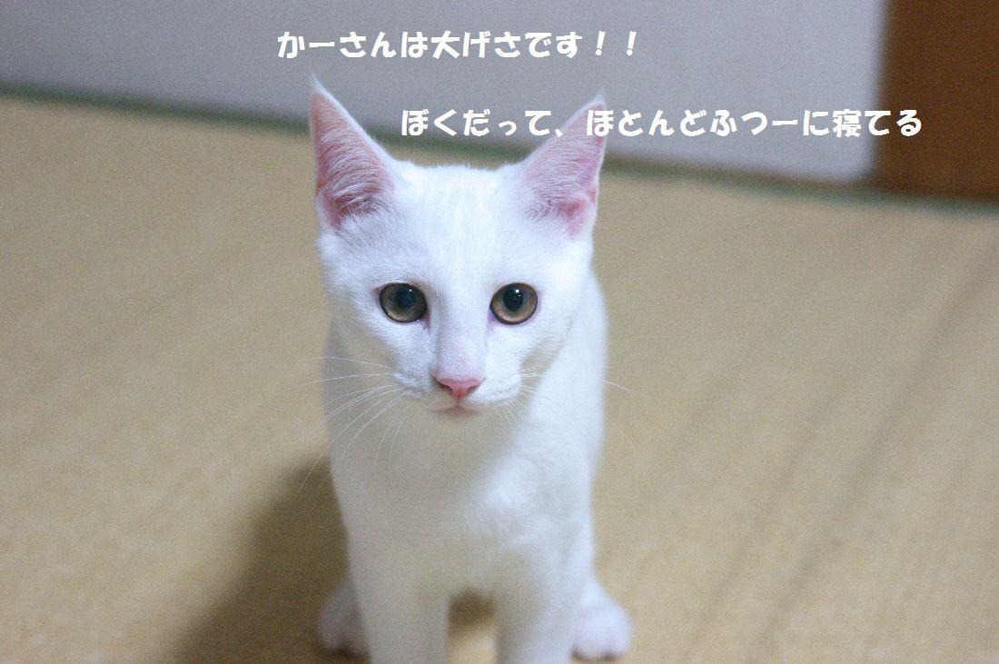 f0197682_1422520.jpg