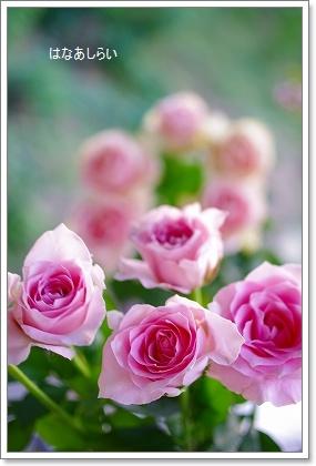 お花の日!!_c0207890_0245250.jpg