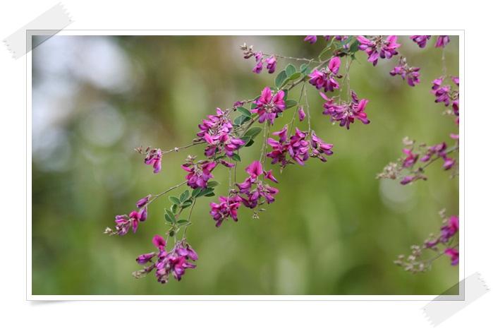 滝野の秋の花(9・20)_f0146493_2143313.jpg
