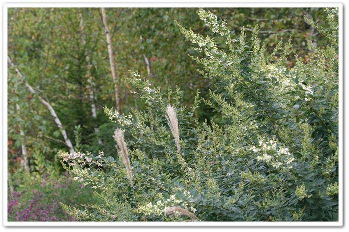 滝野の秋の花(9・20)_f0146493_21433533.jpg