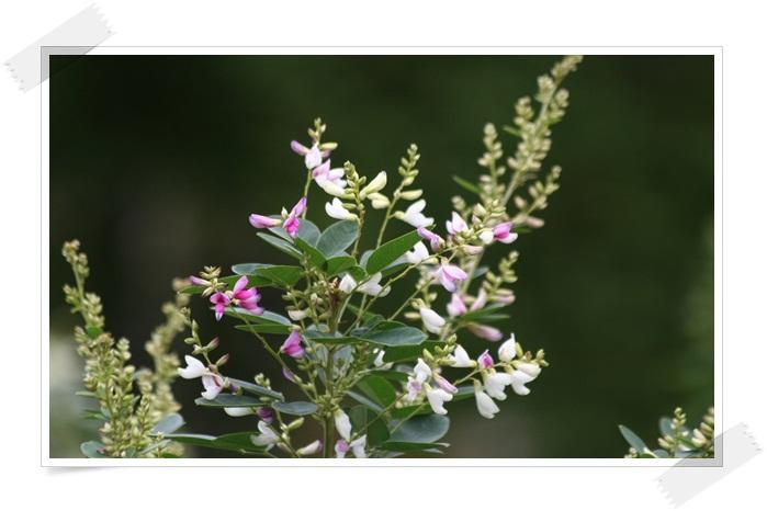 滝野の秋の花(9・20)_f0146493_2143501.jpg