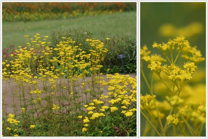 滝野の秋の花(9・20)_f0146493_21442958.jpg