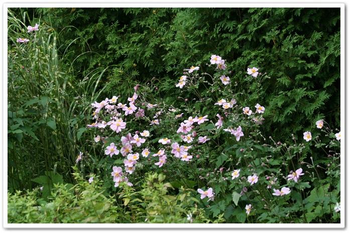 滝野の秋の花(9・20)_f0146493_21443568.jpg
