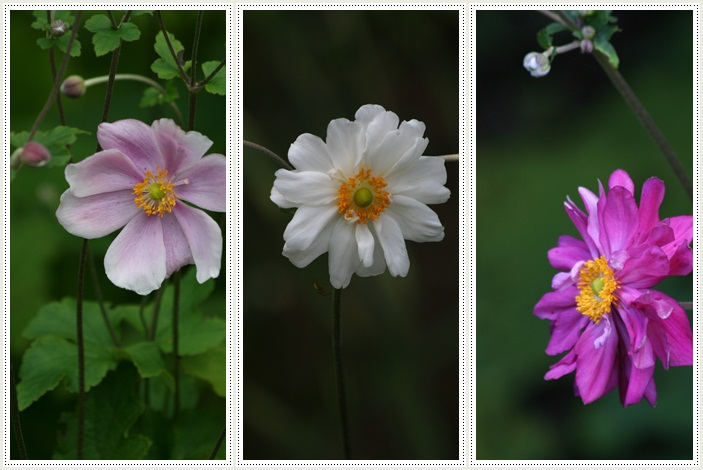 滝野の秋の花(9・20)_f0146493_21444552.jpg