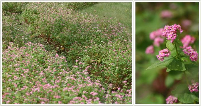 滝野の秋の花(9・20)_f0146493_2145196.jpg