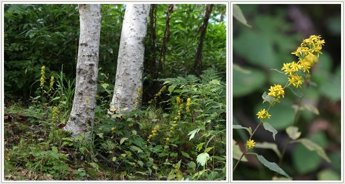滝野の秋の花(9・20)_f0146493_21453289.jpg