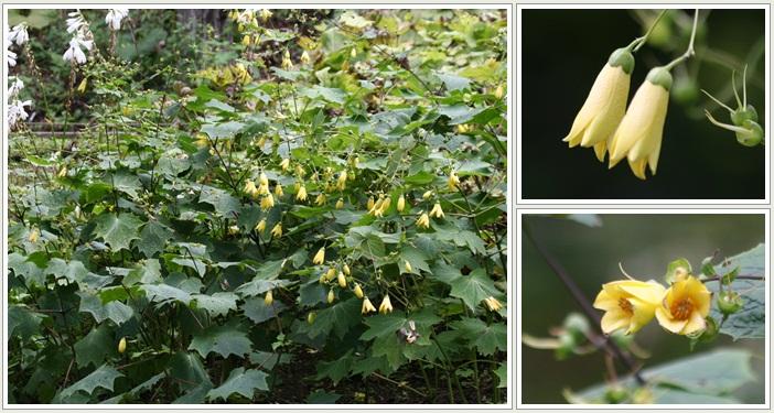 滝野の秋の花(9・20)_f0146493_2145391.jpg