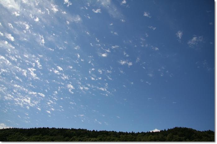 滝野の秋の花(9・20)_f0146493_21463049.jpg