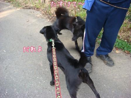 メイちゃんお泊り_f0064906_18312970.jpg