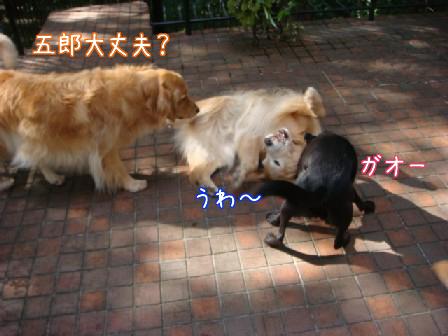 メイちゃんお泊り_f0064906_1842862.jpg