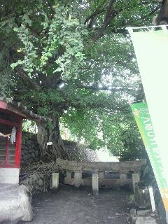 桜島の中_b0157416_21124498.jpg
