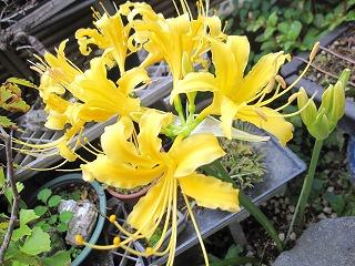 庭に…_b0170834_19344841.jpg
