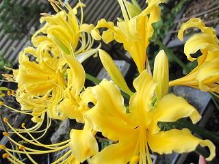 庭に…_b0170834_1934531.jpg