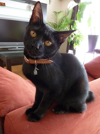 猫のお友だち くましーちゃん編。_a0143140_16494322.jpg